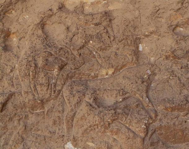 Le incisioni rupestri sono di un tipo mai visto prima nella regione.  Foto per gentile concessione del Ministero delle Antichità