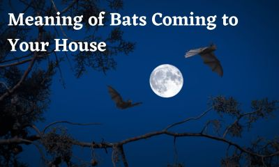 Meaning of Bats Coming to Your House