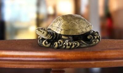 Feng Shui Tips for Keeping Tortoise