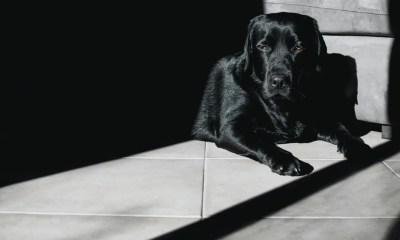 Benefits Of Feeding Black Dog Astrology