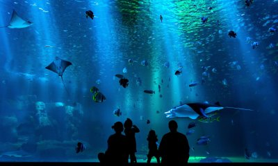 Benefits of Feeding Fish In Astrology