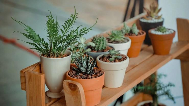 Vastu Tips for Wealth  Correct position of Plants