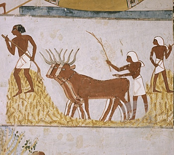 farming in egypt likewise jeep coloring pages on egypt coloring book