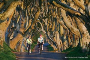 Dark Hedges of Antrim Ireland