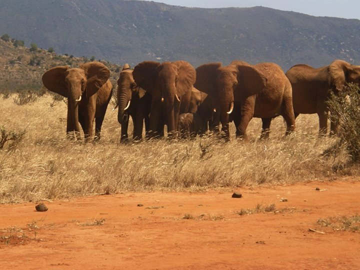 Foto: Facebook/The David Sheldrick Wildlife Trust