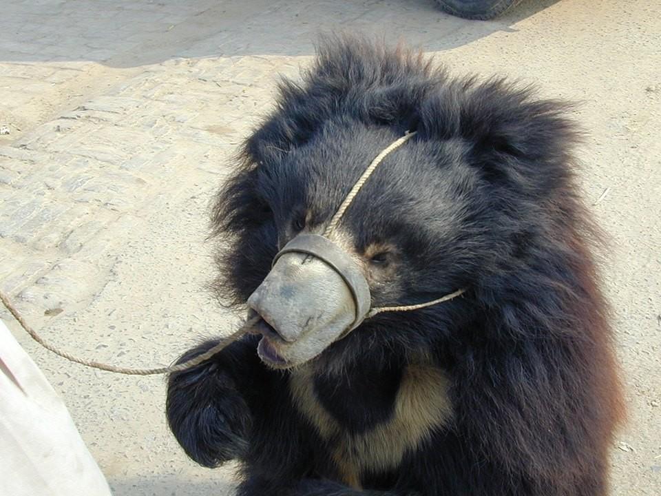 Foto: International Animal Rescue/Wildlife SOS