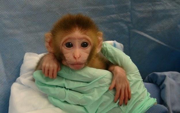 Foto: NIH/PETA