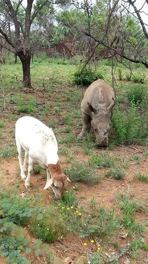 Foto: The Rhino Orphanage