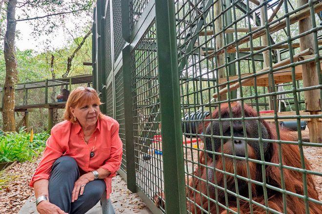Patti Ragan, fundadora do Centro de Grandes Primatas