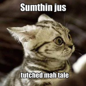 Something Just Touched My Tail Scared Cat