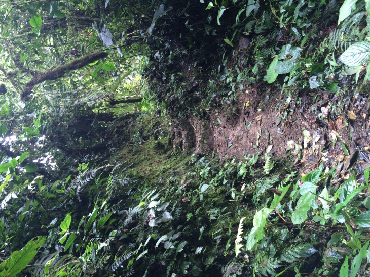 paths-in-the-rainforest-ecuador-and-a-dash-of-cinnamon