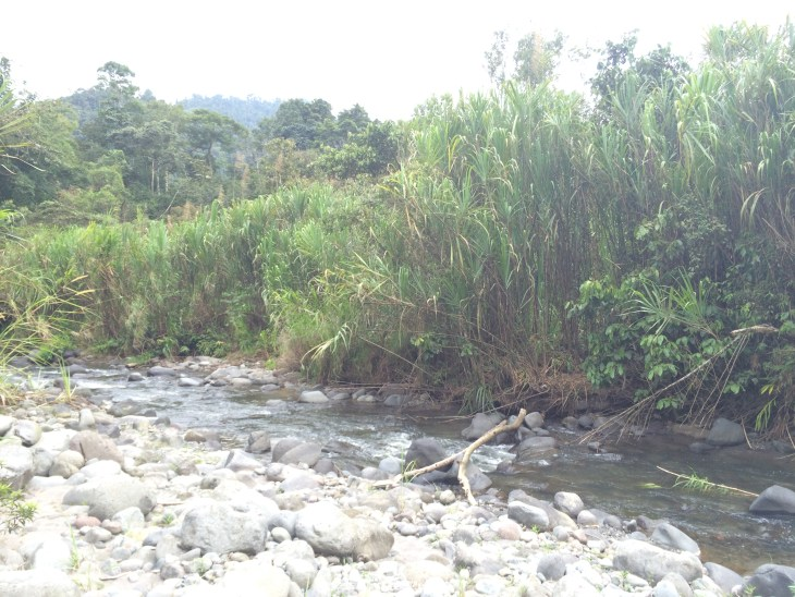 river-in-mindo-ecuador-and-a-dash-of-cinnamon