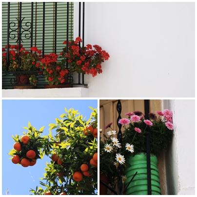 Oranges and balcony flowers Semana santa tolox sierra de las nieves Easter Sunday