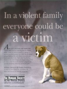Animal-abuse-against-animal-cruelty-5492364-1256-1648