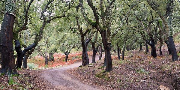 Wandern in den Korkeichenwäldern
