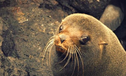 galapagos seal photography tour Ecuador & Galapagos