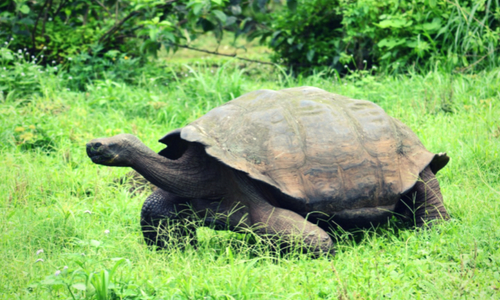 galapagos tortoise photography tour Ecuador & Galapagos