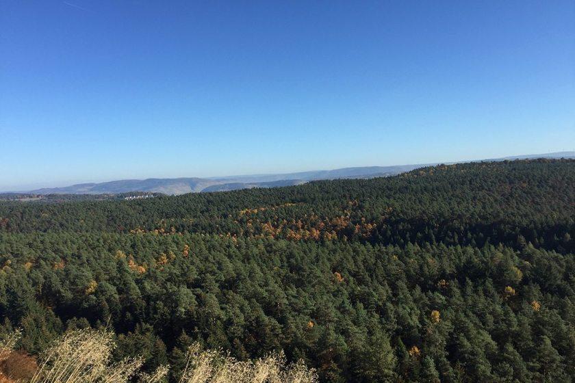 Blick über die weiten Wälder der Südeifel bis hinüber zu den weinbergen am Moselufer