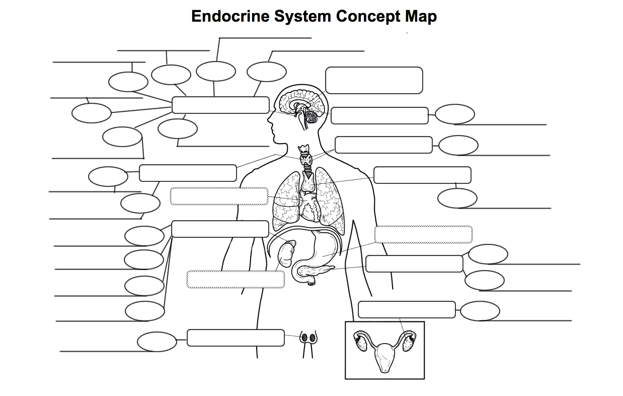 Endocrine Amp Reproductive Systems