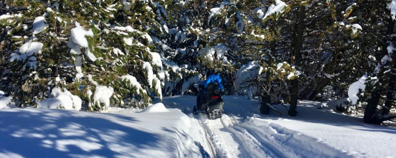 Team on snowmobiles through forest