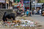 wpid254-Indien-014.jpg
