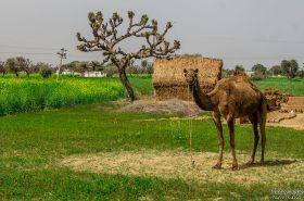 wpid300-Indien-037.jpg