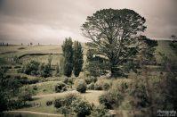 wpid1330-Neuseeland-012.jpg