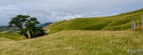 wpid1389-Neuseeland-041.jpg