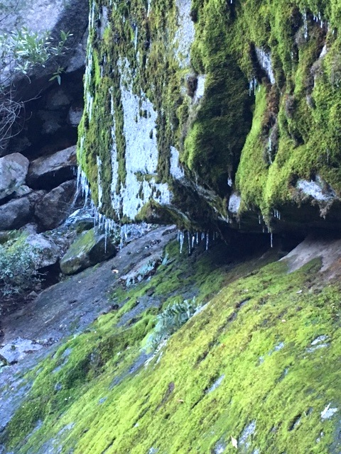 Icicles and moss at Yosemite.