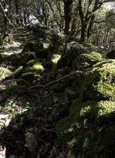 cerchio-di-pietre-04