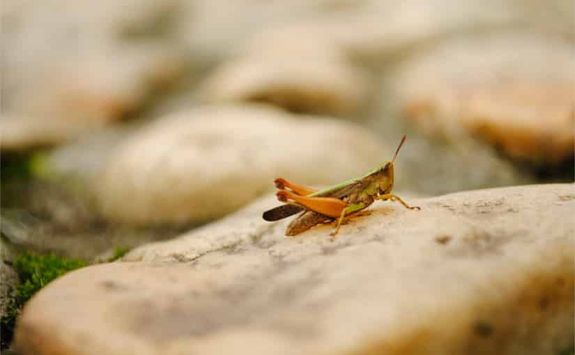 a bug on a stone representing bad bug reports