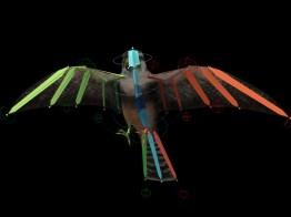Bird Rig