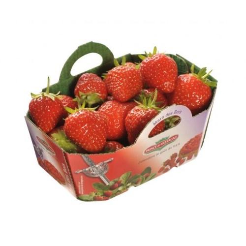 fraise-mara-des-bois