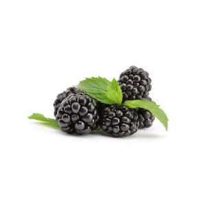 beautiful blackberries with leaf isolated on white