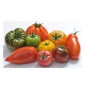 Tomate-dantan