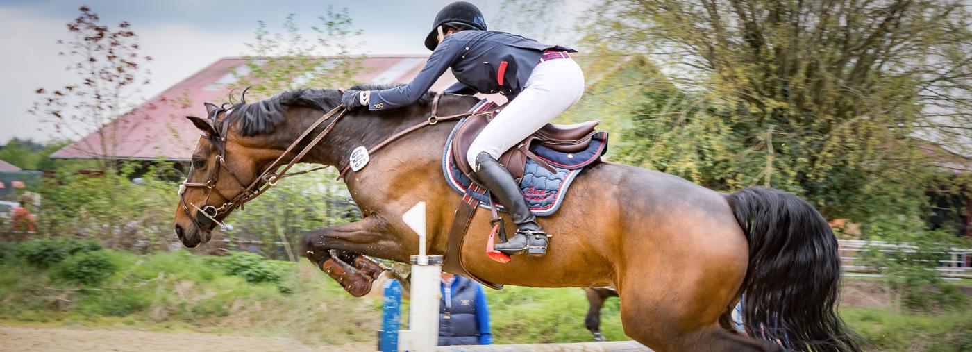 Pferd beim Sprung (Springreiten)
