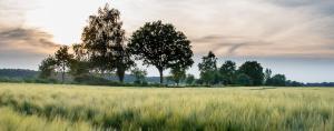 Kornfeld mit Bäume