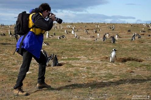 Илья подбирается к пингвинам.