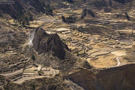 Огороды-террасы, удачно вписанные в пейзаж. Обратите внимание как близко проходит дорога к краю ущелья (нижняя правая часть фотографии).