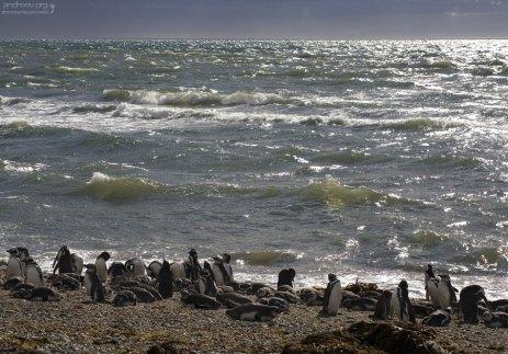 Пингвинье лежбище на берегу залива Seño Otway.