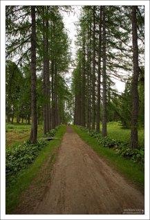 Центральная лиственничная аллея в ботаническом саду.