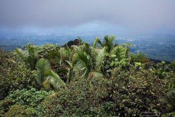 Пальмы на самом верхнем уровне леса, и облака, уже частично перекрывшие обзор.