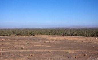 Очень обширный пальмовый оазис Du Draa на подступах к Jbel Sarhro.
