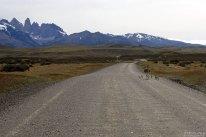 Страусиха-нанду со страусятками бежит по парковой дороге.