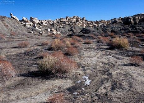Креозотовые кусты на подходе к каньону.