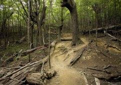 В лесу, где леший бродит...