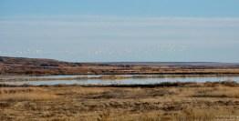 Прерии и птицы. Заповедник Bitter Lake National Wildlife Refuge.