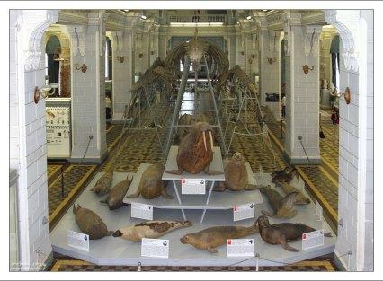 Первый зал Зоологического музея.