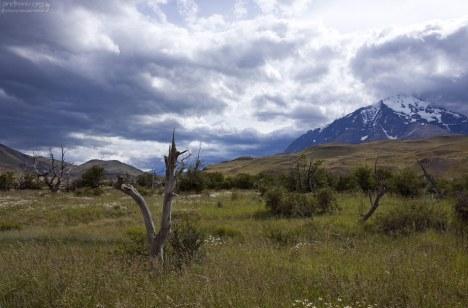 Типичный пейзаж для северной Патагонии.