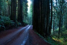 10-мильная дорога через Redwoods state park.